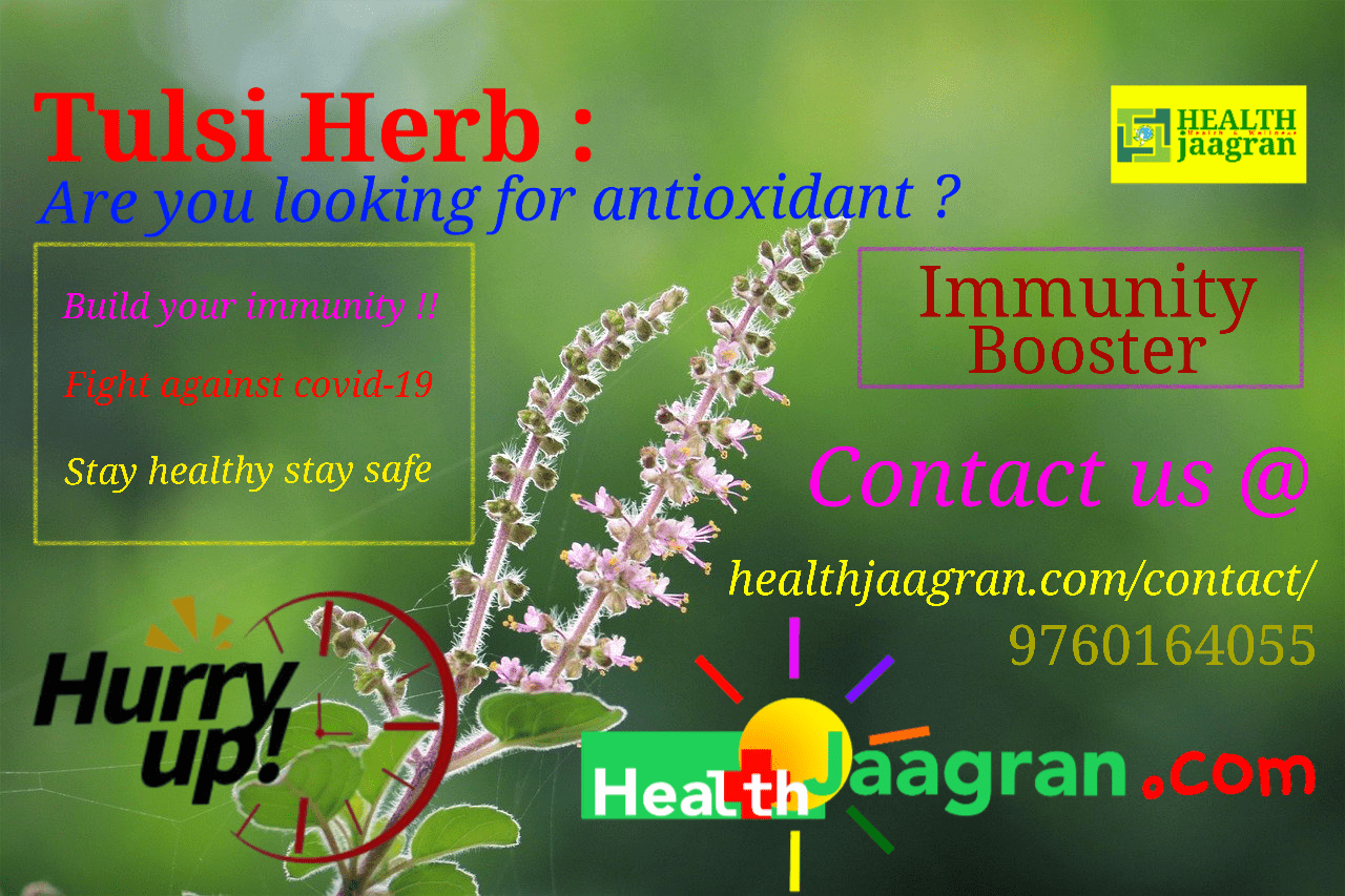Tulsi Botanical Name and Powerful Tulsi Health Benefits in the World